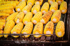 A close-up of grilled, yellow corncobs. Royalty Free Stock Photo
