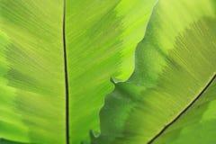 Close-up groene bladeren Stock Fotografie