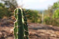 Close-up groene cactus in berg Stock Afbeeldingen