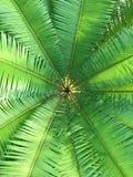 Close-up groene installatie Royalty-vrije Stock Afbeelding