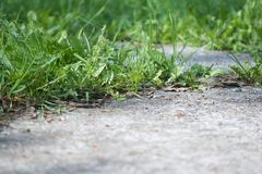 Close up on ground outdoors with green grass and asphalt footpath detail Royalty Free Stock Image