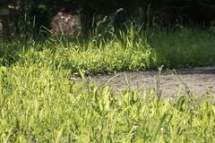 Close up on ground outdoors with green grass and asphalt footpath detail Royalty Free Stock Photos
