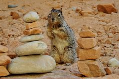 Close up of a Ground Squirrel between Cairns Royalty Free Stock Image
