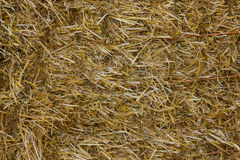 Close up of ground. Texture straw or hay Stock Photo