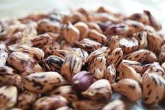 Close up groundnut or monkey nut or peanut Stock Photos