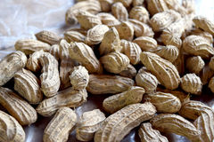 Close up groundnut or monkey nut or peanut Royalty Free Stock Images