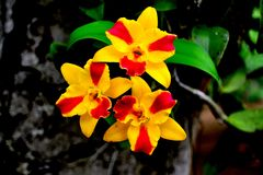 Close up group of colorful orchid on branch Royalty Free Stock Images