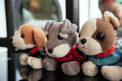 Cute dogs doll royalty free stock photography