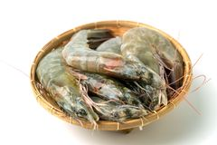 Close up group of fresh raw pacific white shrimp in bamboo bowl on white background stock images