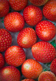 The close up of group of fresh red strawberry,made with filter Stock Images