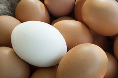 Close up of group of identical chicken eggs except one Royalty Free Stock Photography