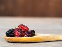 Close up group of mulberries is placed on a wooden spoon on a wooden table. Mulberry this a fruit and can be eaten it have a red. And purple color.. Mulberry is Royalty Free Stock Images