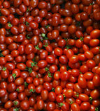 Close up group of red tomatoes on ground use for beautiful backg Stock Photography