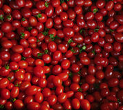 Close up group of red tomatoes on ground use for beautiful backg Stock Photos