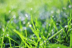 Green Grass Background - Color Screen Saver - Bokeh of Colors in Nature Stock Photo