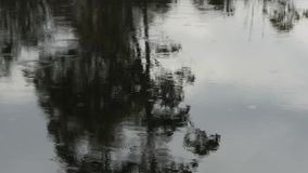 Close up of a gum tree reflected on the narcissus river