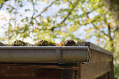 Close-up of a gutter at a roof. Royalty Free Stock Photography