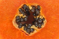 Close-up of haft papayas with black seeds. Look for the inside royalty free stock photo