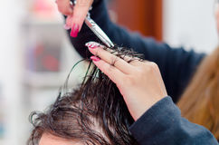 Close up of hair cutting, scissors ready and wet hair.  royalty free stock photo