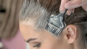 Close up of hair dying. Brush is applying hair color. Shocking facts about hair dye stock video