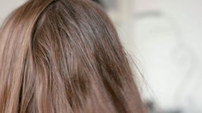 Close-Up Hairdresser`s Spray on Woman`s Wet Straight Hair in Beauty Salon stock video footage