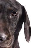 Close up of half a dog face Stock Photos