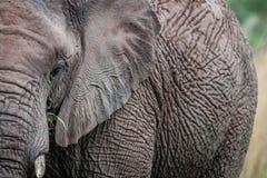 A close up of half an Elephant stock photos