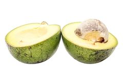 Closeup of Half green thai avocado on white background. Close up of Half green thai avocado on white background royalty free stock image