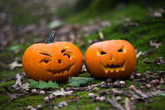 Close up on Halloween pumpkin in autumn forest Stock Photos