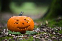 Close up on Halloween pumpkin in autumn forest Stock Photos