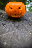 Close up on Halloween pumpkin in autumn forest Royalty Free Stock Photography
