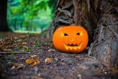 Close up on Halloween pumpkin in autumn forest Stock Photo