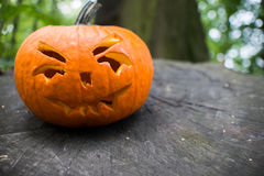 Close up on Halloween pumpkin in autumn forest Stock Images