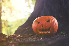 Close up on Halloween pumpkin in autumn park with sunligh Stock Photography