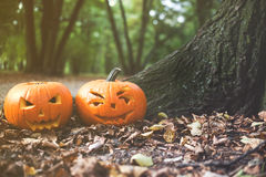 Close up on Halloween pumpkin in autumn park with sunligh Stock Photos
