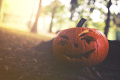 Close up on Halloween pumpkin in autumn park with sunligh Royalty Free Stock Photos