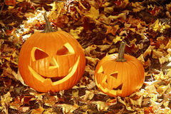 Close up of halloween pumpkins on leaves Royalty Free Stock Photo