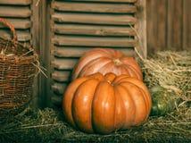 Close up of halloween pumpkins Royalty Free Stock Photos