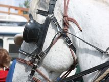 Close-up of halter and blinker. On a draft horse at show stock image