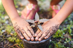 Close up Hand of children holding plant and soil Royalty Free Stock Photos