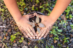 Close up Hand of children holding plant and soil Stock Image