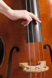 Close-up on hand on double bass playing pizzicato Royalty Free Stock Photography