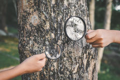 Close up hand holding magnifying glass and big tree Royalty Free Stock Photo