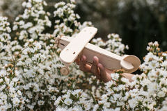 close-up of Hand holding a wooden airplane plane on white flower Royalty Free Stock Photography