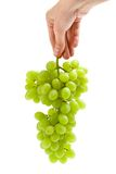 Close up of hand keeping bunch of grape Stock Image