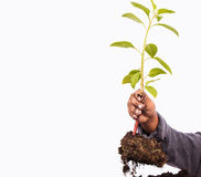 Close up of hand little boy hold plant tree stock image