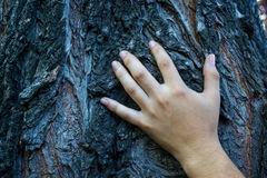 Close up of a hand on a tree trunk. With cold tone transmitting mystery stock photo