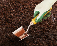 Close up on hand using trowel in soil bed Royalty Free Stock Photo