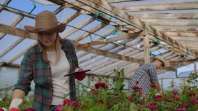 Close-up of hands of a farmer businessman touching the roses and use your fingers to tap on the tablet screen. Checking stock footage