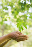 Close-up of hands holding young plant Stock Image